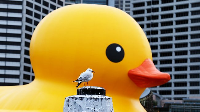 Rubber Duck says attend the Sydney Festival or else. Picture: Adam Taylor Source: The Daily Telegraph
